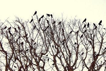 گنجشک ها/از:رضا افضلی